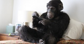 Primate Cinema: Apes as Family