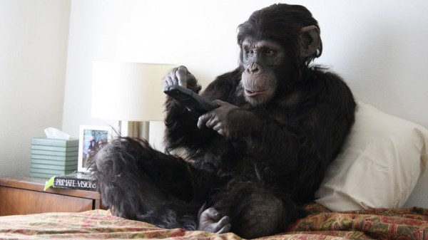 Apes as Family, photo by Matt Chaney/Primate Cinema