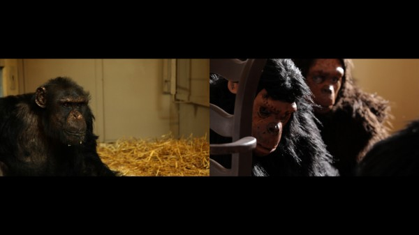 still from Apes as Family