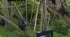 Primate Cinema: Apes as Family Presskit